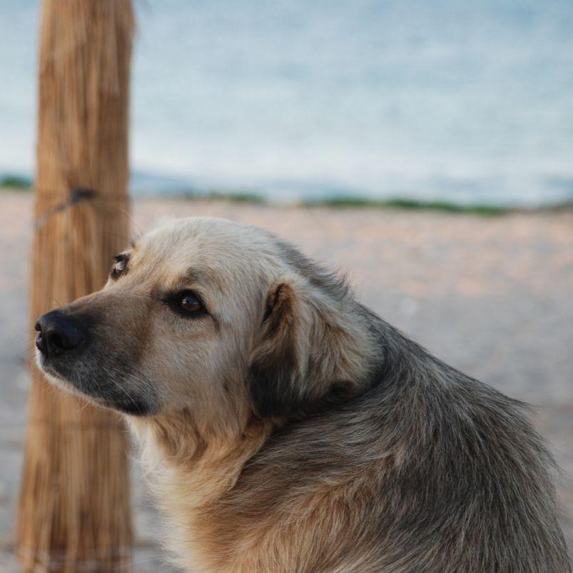 Hund schaut zur Seite