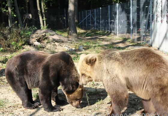 Melanka und Leo