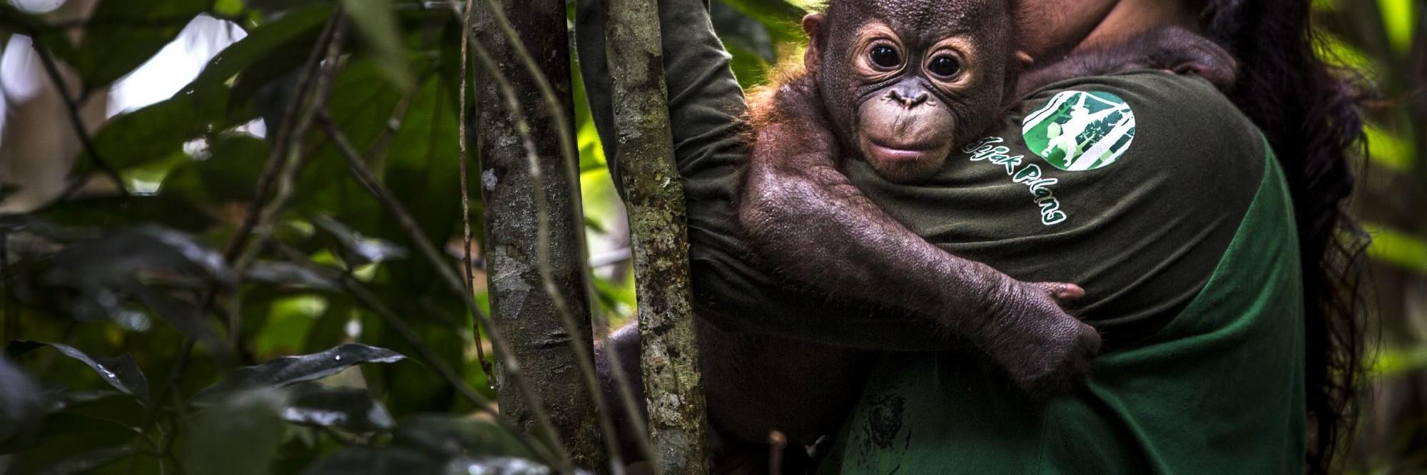 Unterstützen Sie unsere Orang-Utans