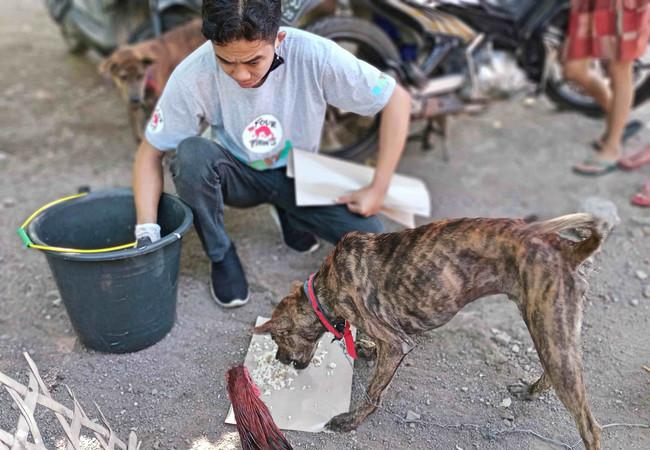 Street dog being fed through FOUR PAWS Cans of Kindness program