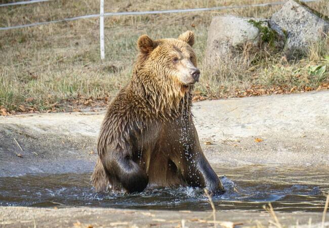 Teddy beim Baden