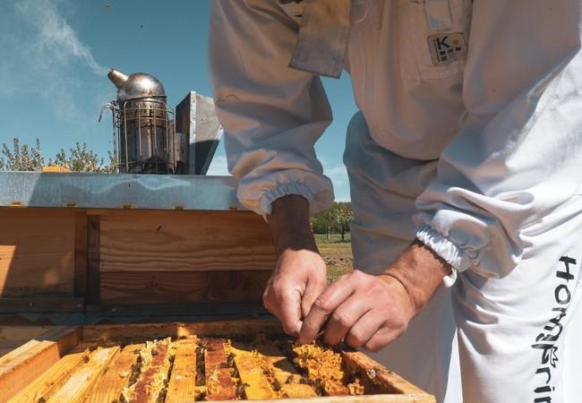 Waben bei Honigernte