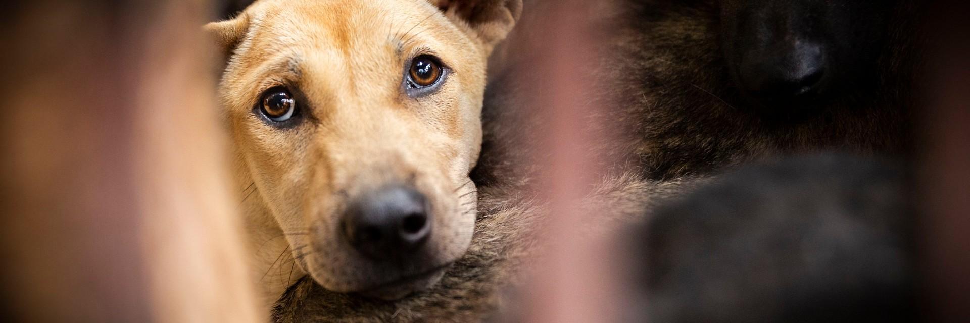 Handel in hondenvlees