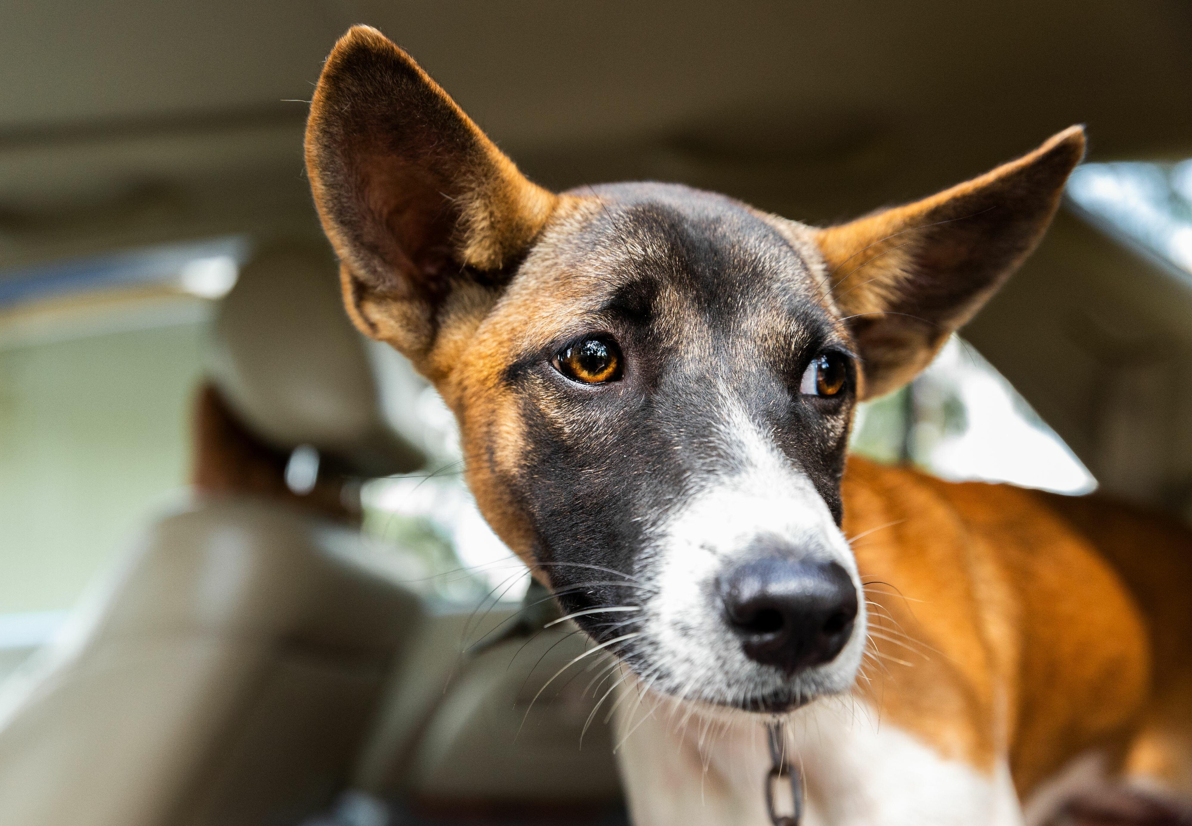 dog locked in a car