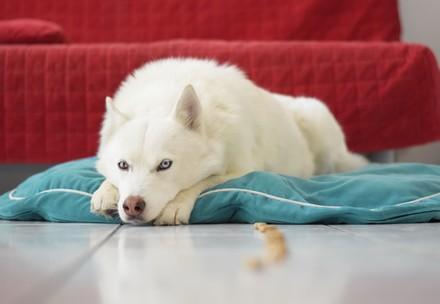 Hunde brauchen auch Zeit für Umstellungen