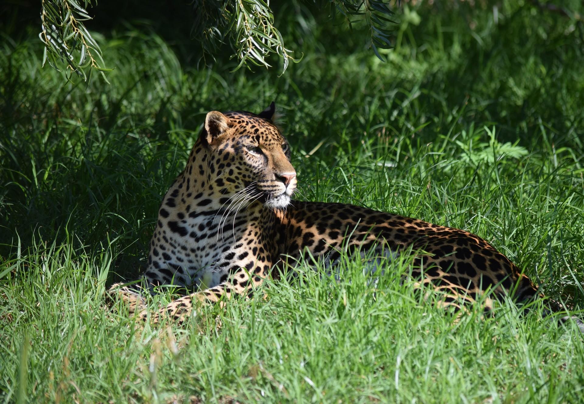 Leopard Bakari at LIONSROCK