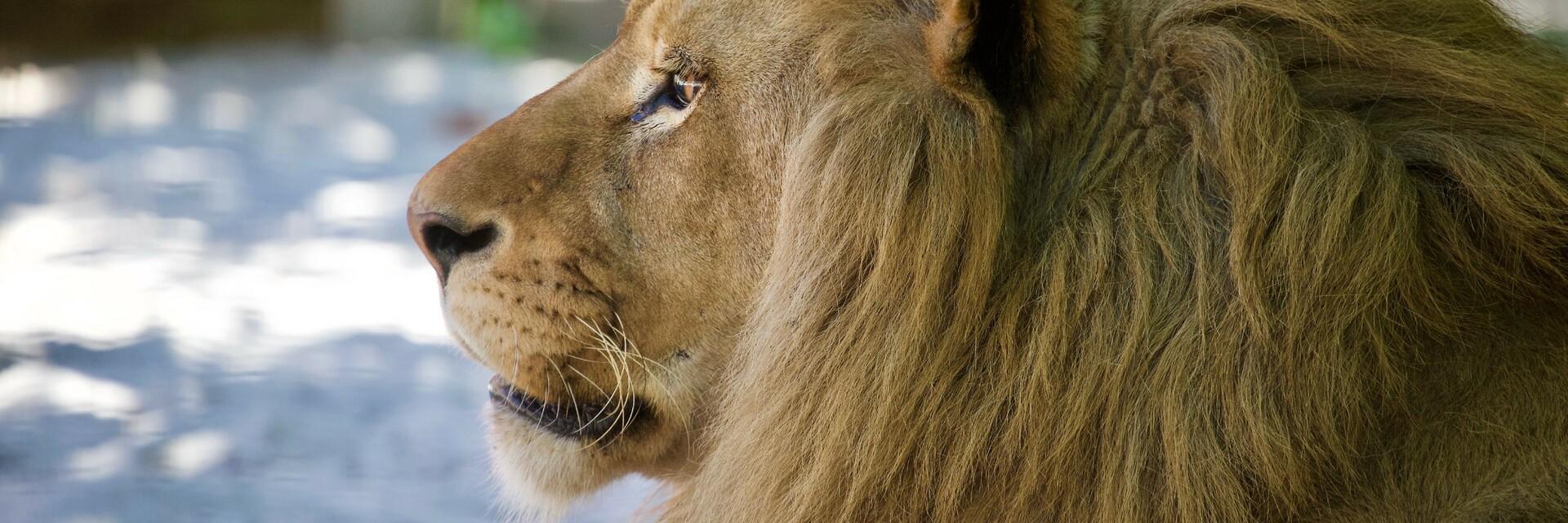 Lion Ivan-Asen in FELDIA 2019