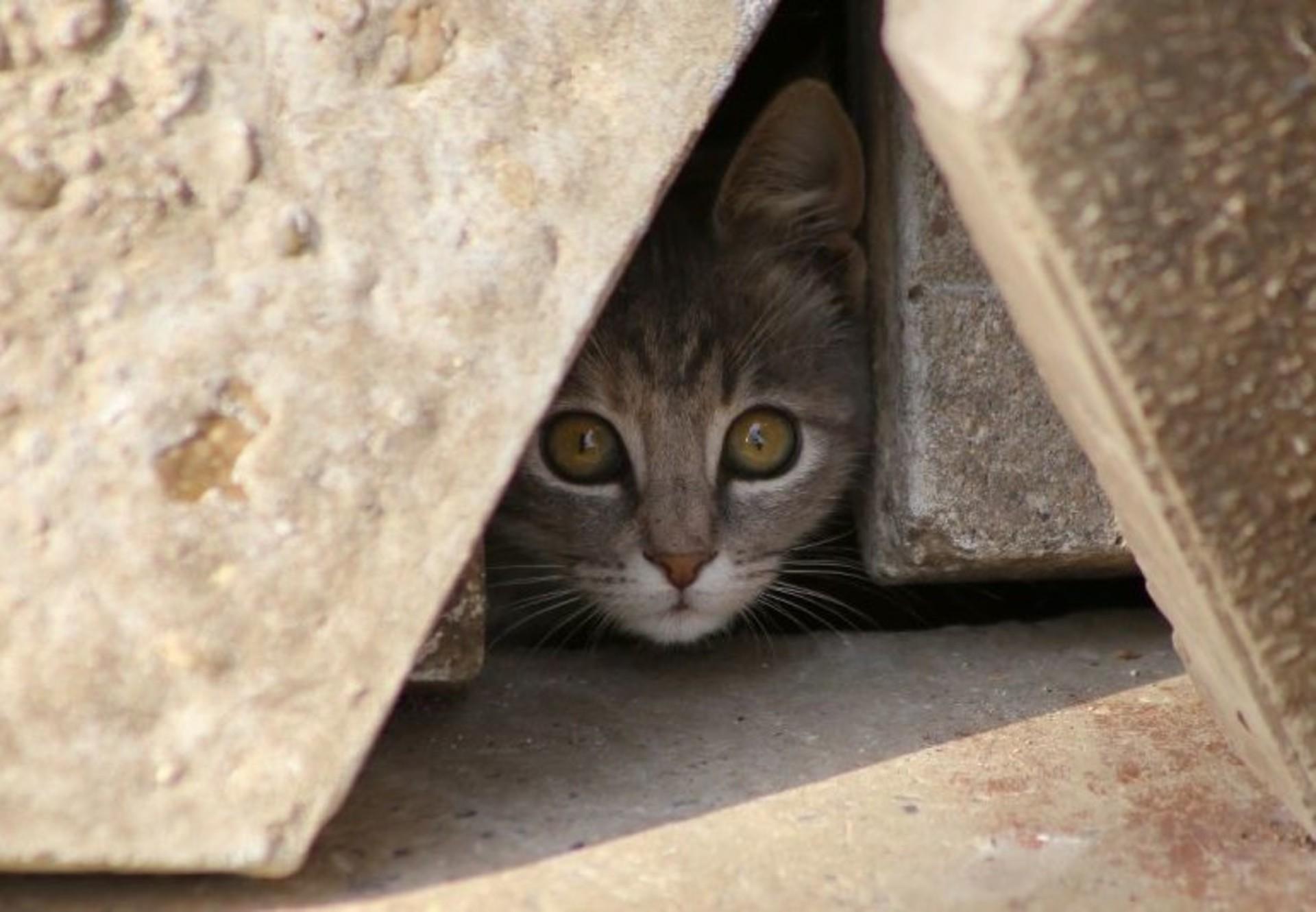 cat-stone