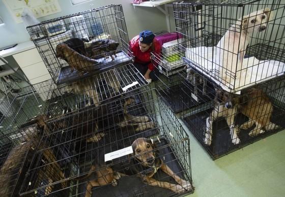 Sterilisatie van honden