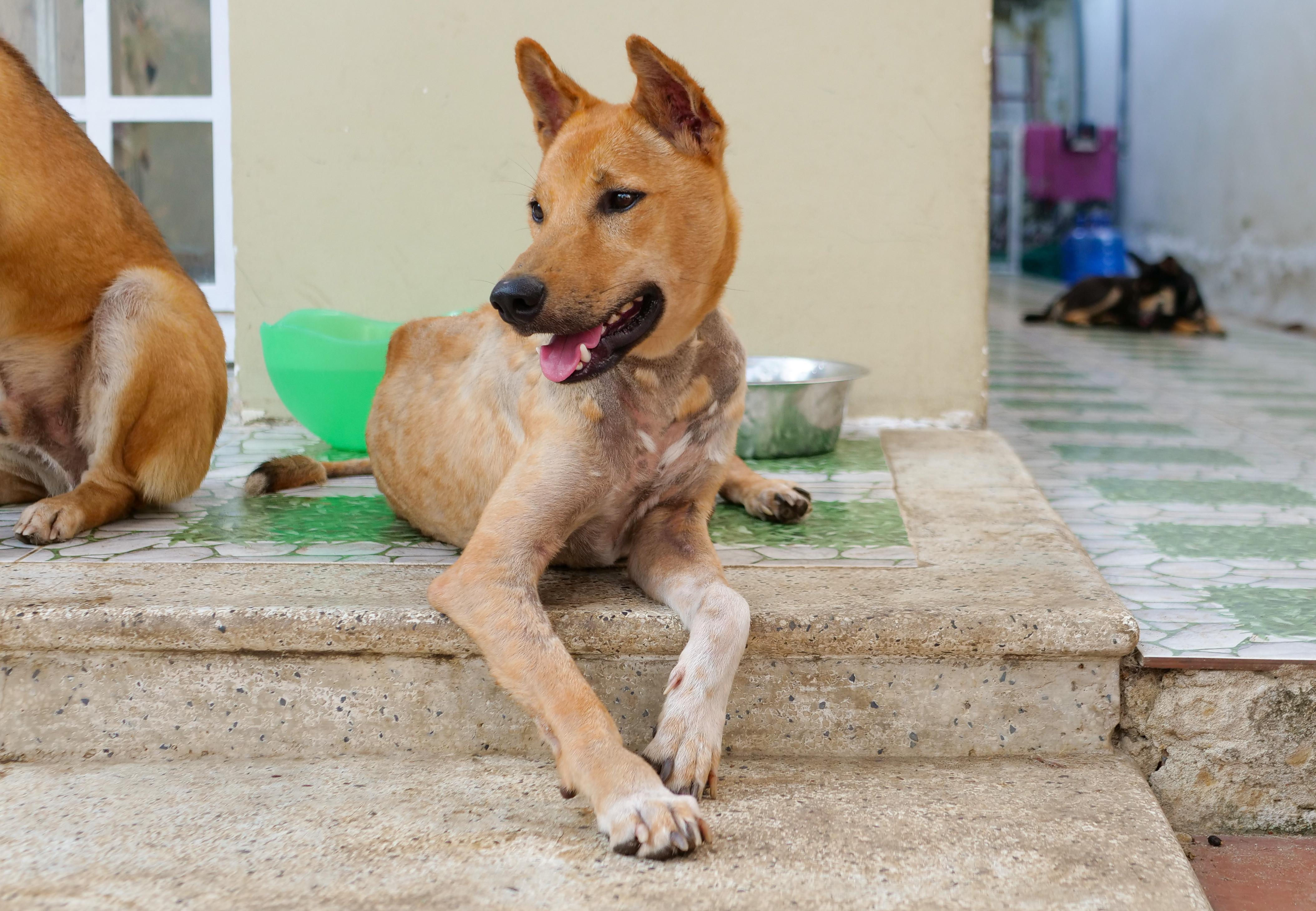 Hund Archie