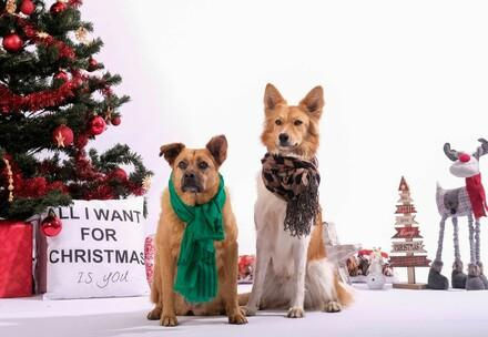 Dogs with Christmas tree