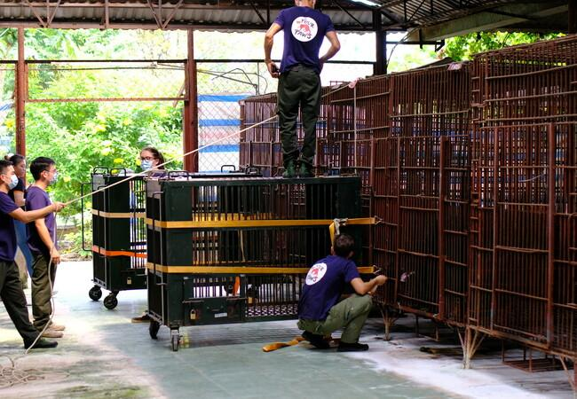 Bears going into crates for transport