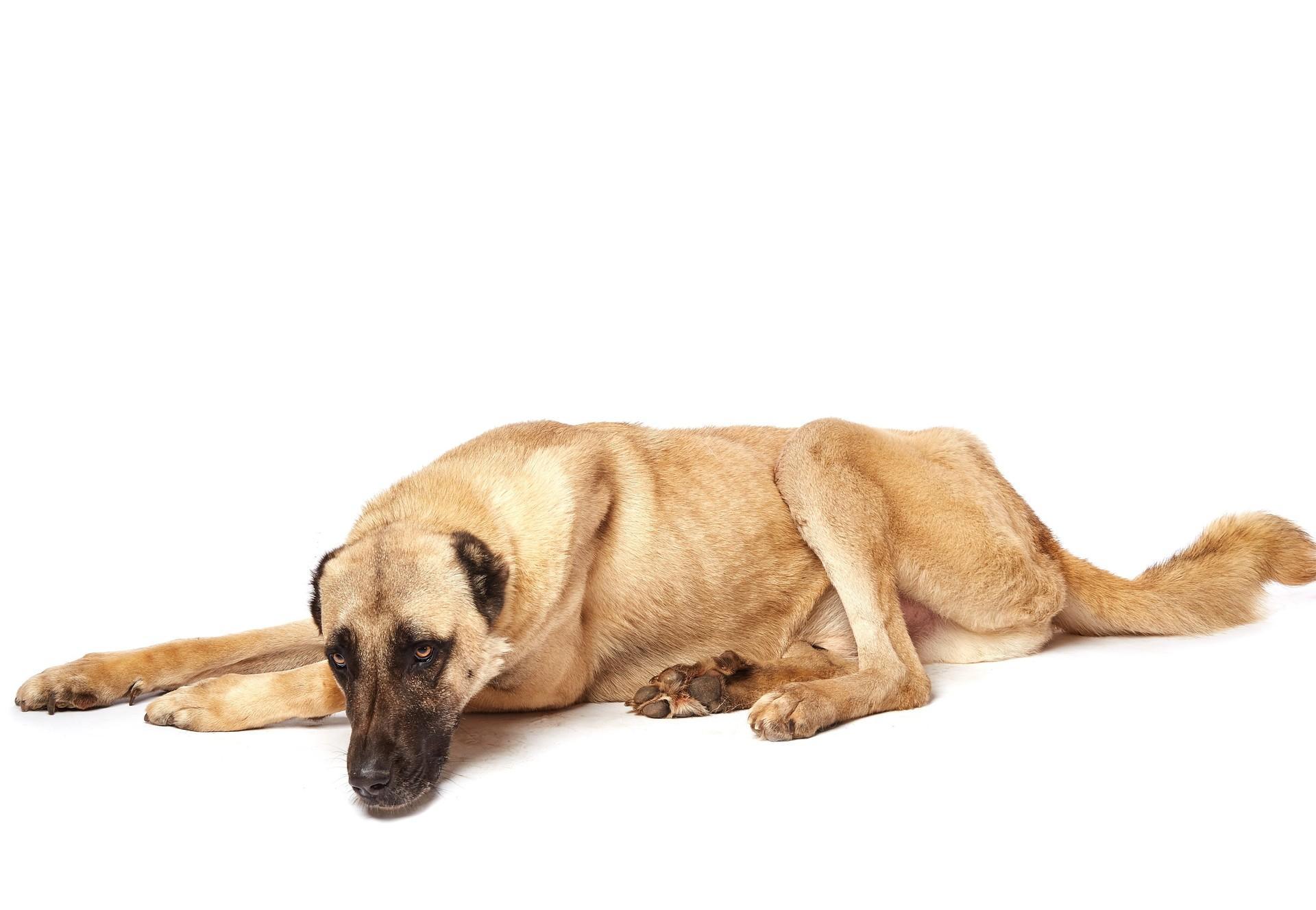 куче Рафи (dog Raffy)