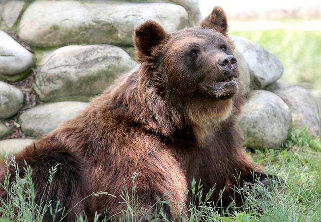 Bears Ruta