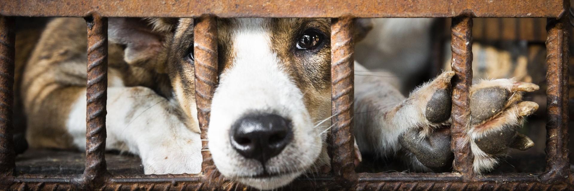 Commerce de la viande de chien et de chat