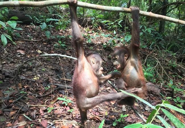 Birma et Indra en train de jouer