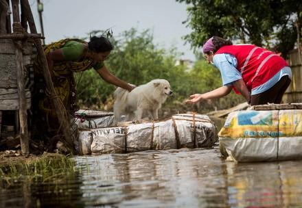 Hund wid gerettet nach Unwetter in Chennai