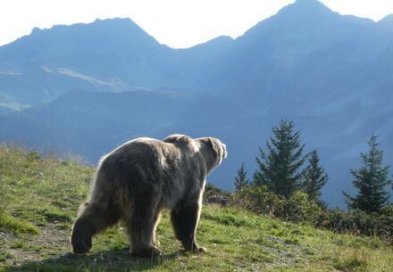 Arosa Barenland bear sanctuary with bear Napa