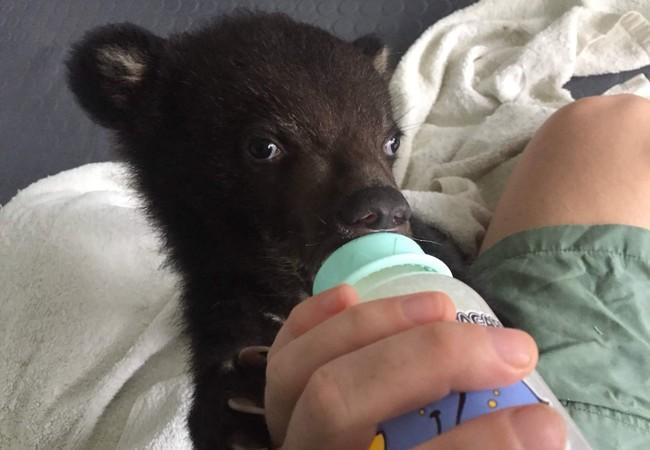 Bear cub Mochi with drinking bottle