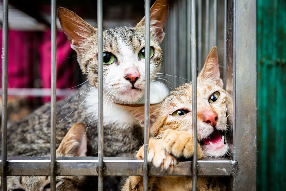 Cats looking out of cafe in the cat meat trade
