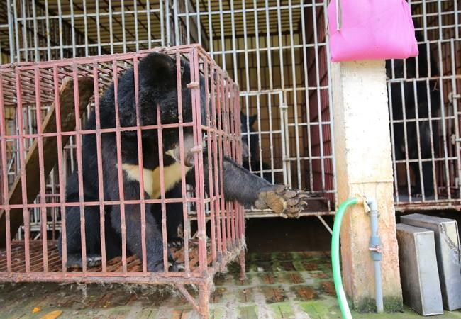 Thu was kept in a tiny cage