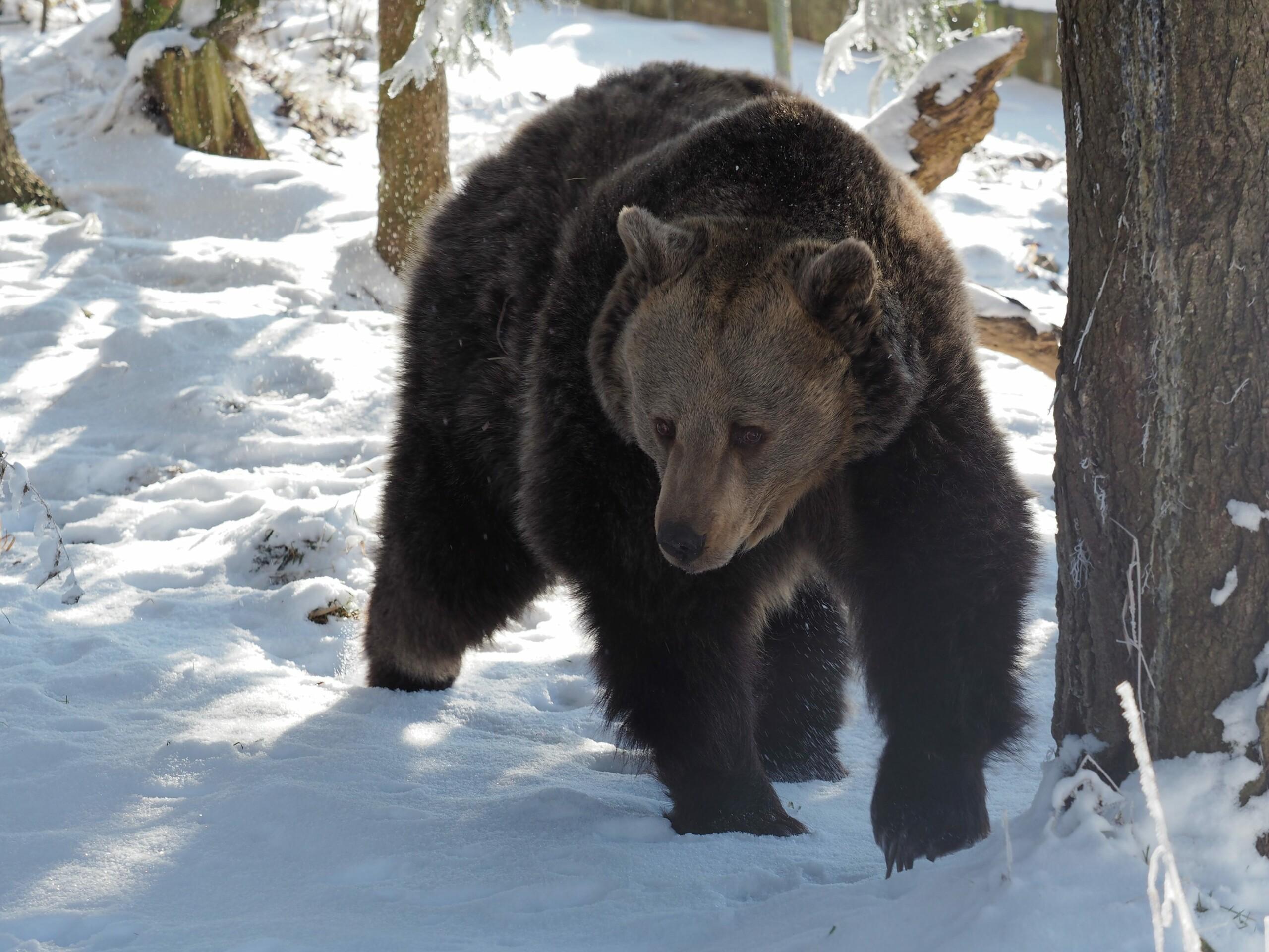 Brumca unterwegs im Schnee