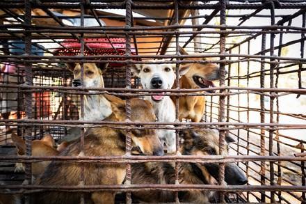 Plusieurs chiens dans une petite cage