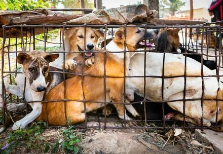 Hunde in Käfig