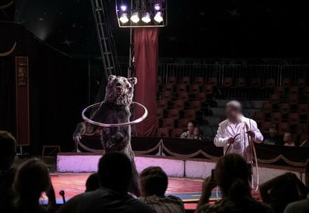 Bear performing in a circus
