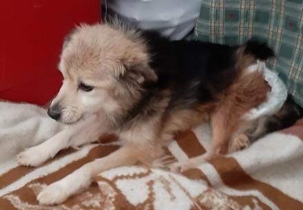 Le chien Zhulia