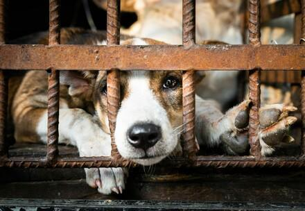 Caged dog in a slaughterhouse