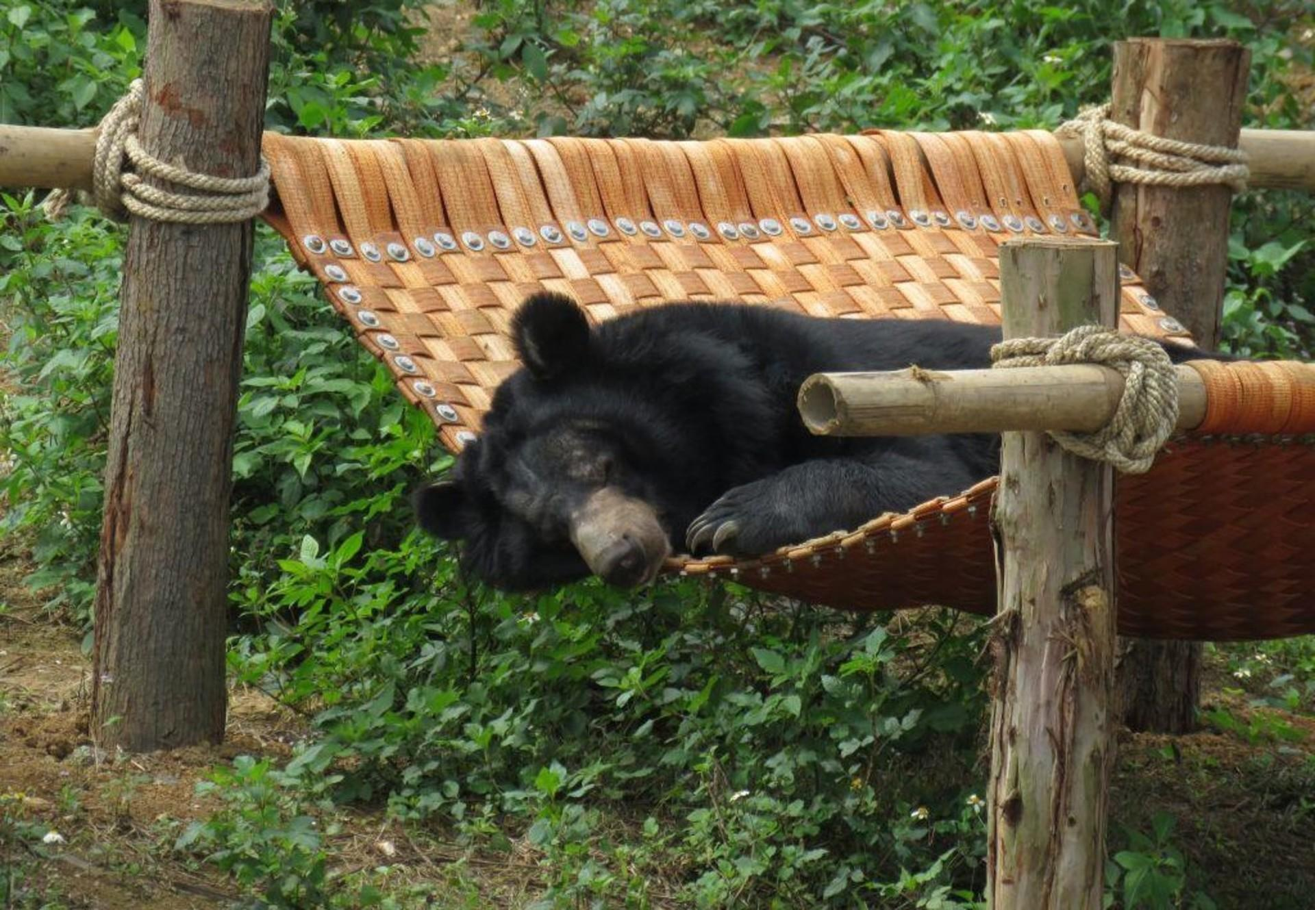 Black bear in the hammock