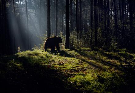 Dämmerungsstimmung im Wald