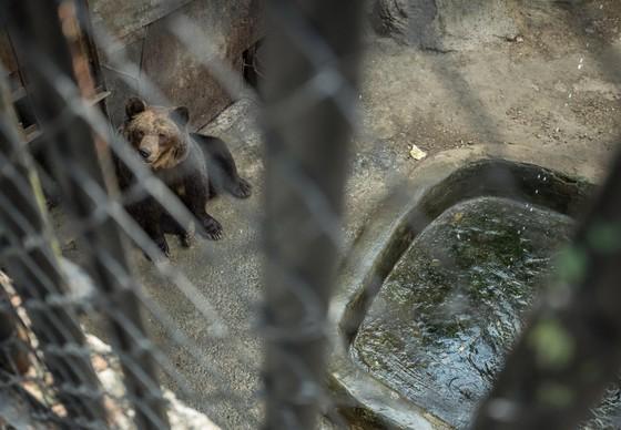 Investigation into the Zoo of Aytos, Bulgaria.