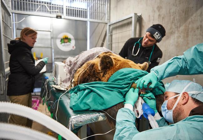 Contrôle vétérinaire de Meimo à Arosa Terre des Ours