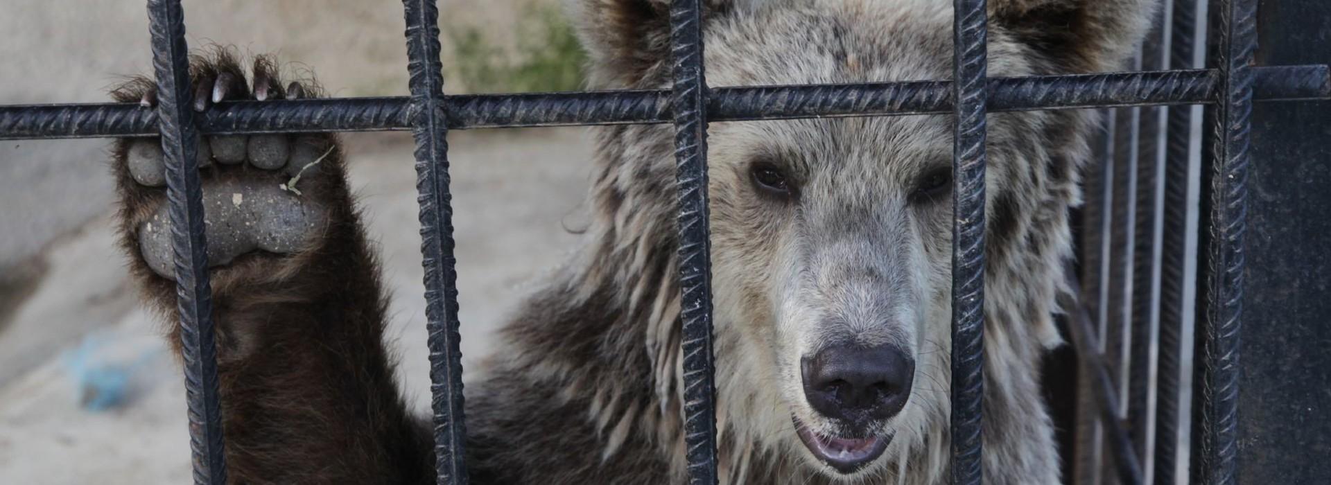 Ihre Spende für Tiere in Not