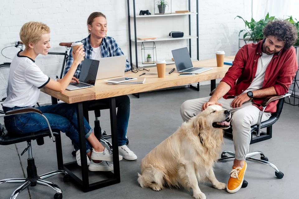 Un chien au bureau