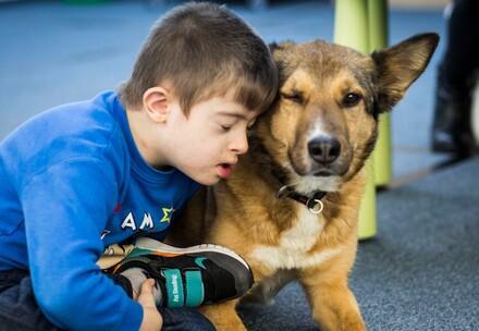 QUATRE PATTES en Roumanie : les chiens errants deviennent des chiens de thérapie