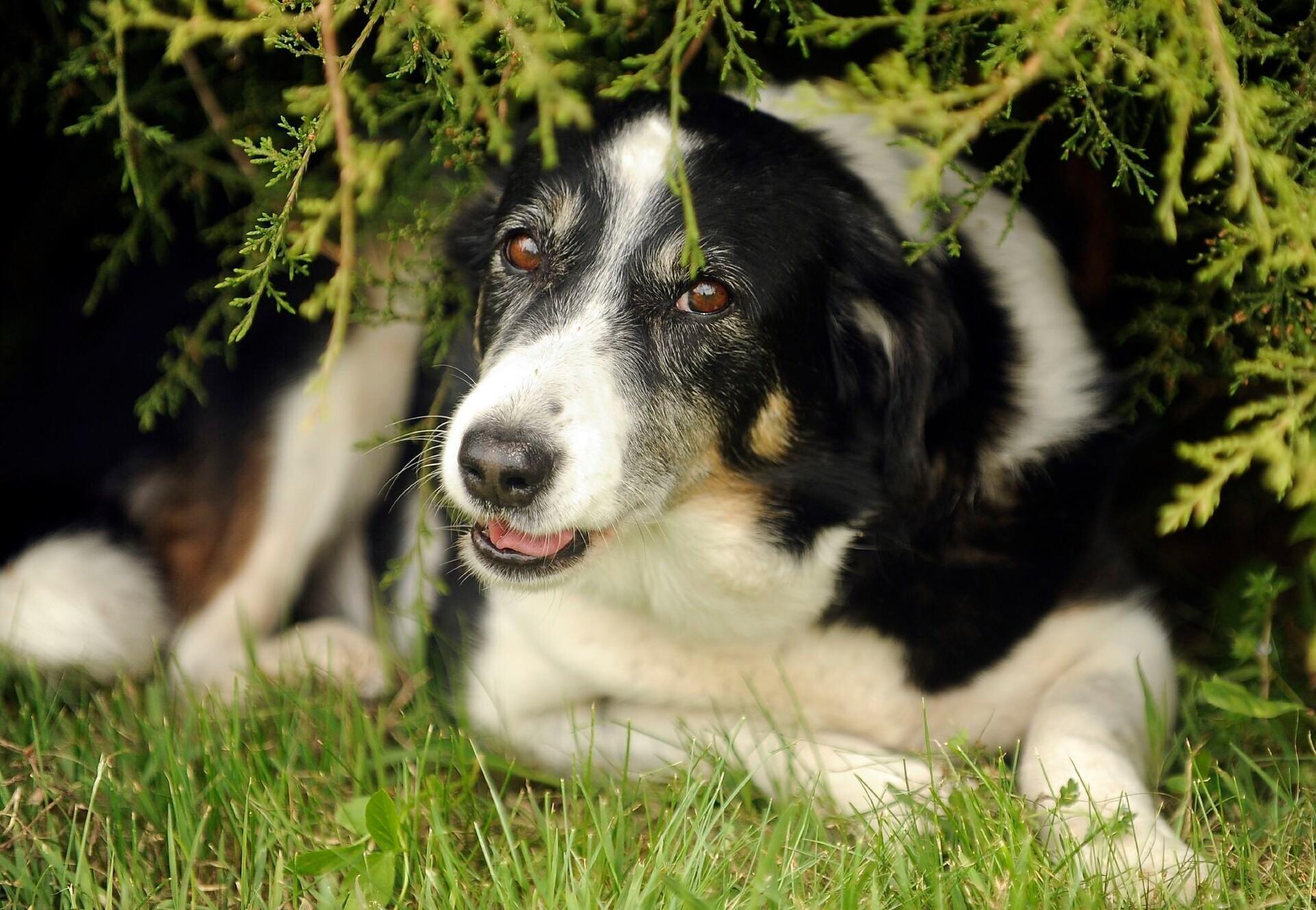 Hund unter Gebüsch