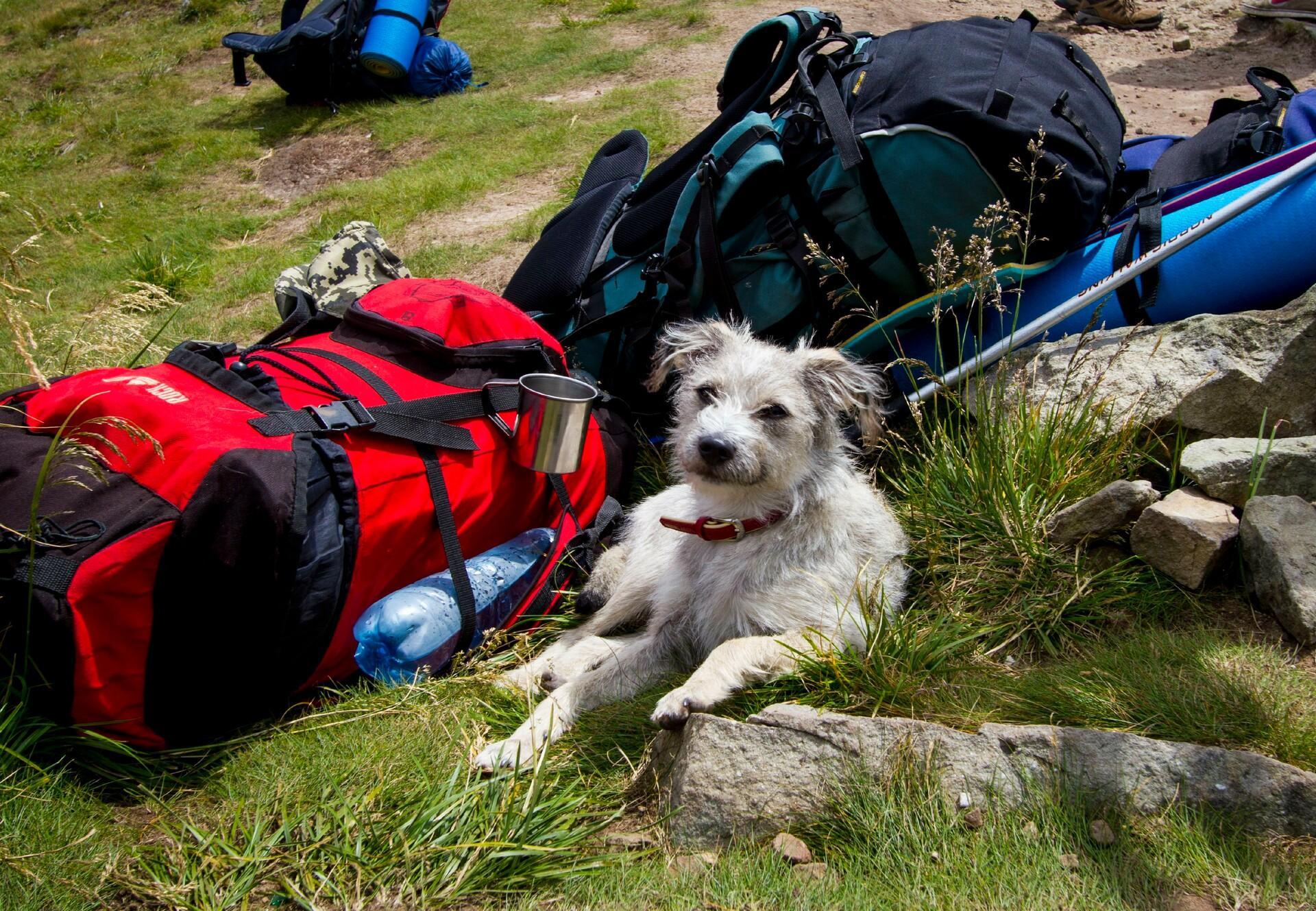 Hund beim Wandern