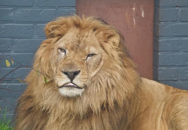 Lion Lenci in 2019