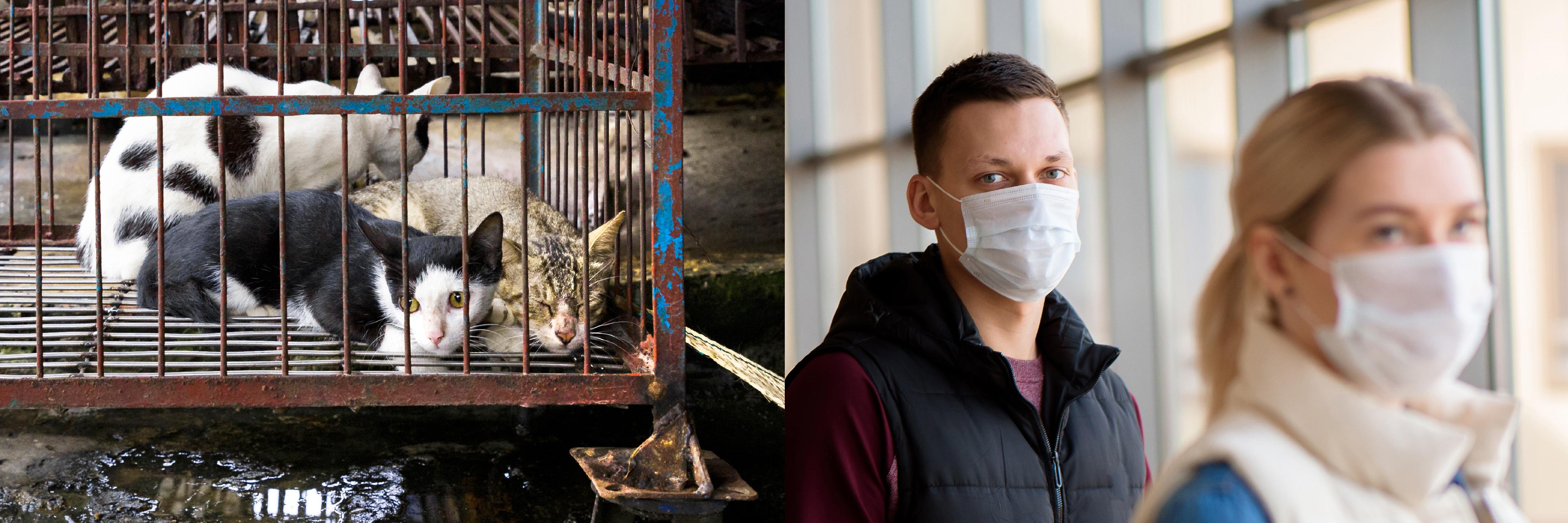Die nächste Pandemie? - Eine Gefahr für Mensch und Tier