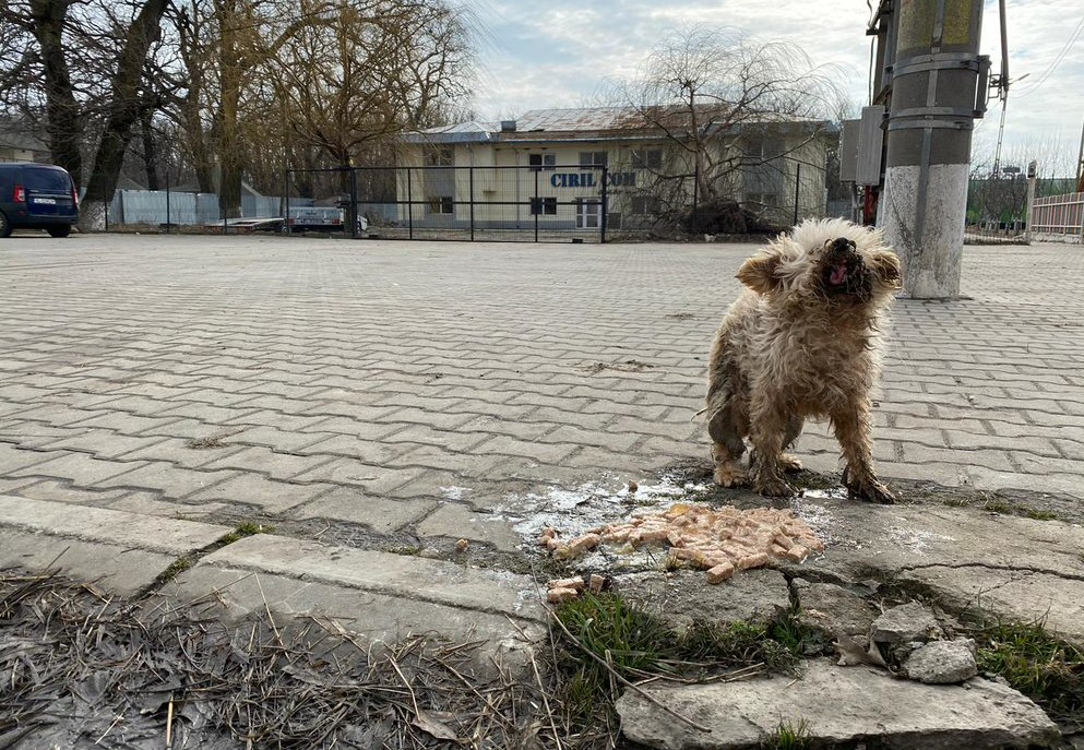 Dog Oiţã on the streets
