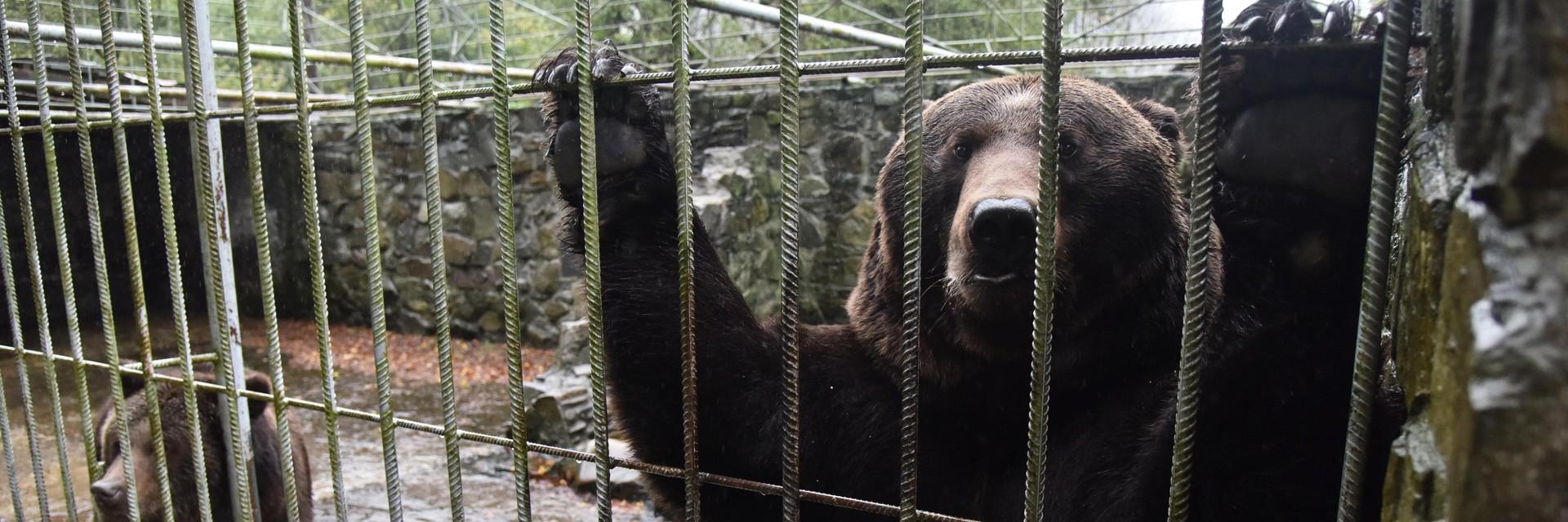 Enfin, nous avons l'occasion de sauver deux ours et de réunir une famille d'ours en Ukraine.