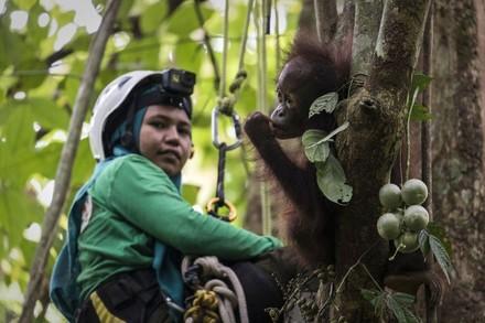 Pflegerin mit Orang-Utan auf dem Baum
