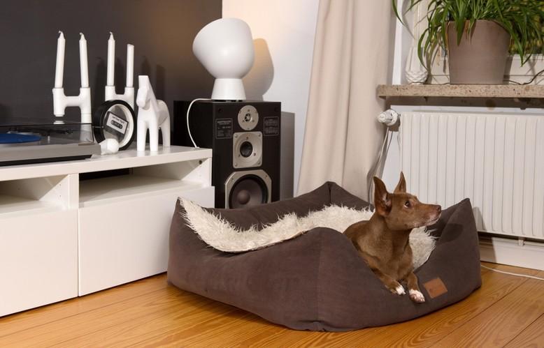Hund in seinem Bett