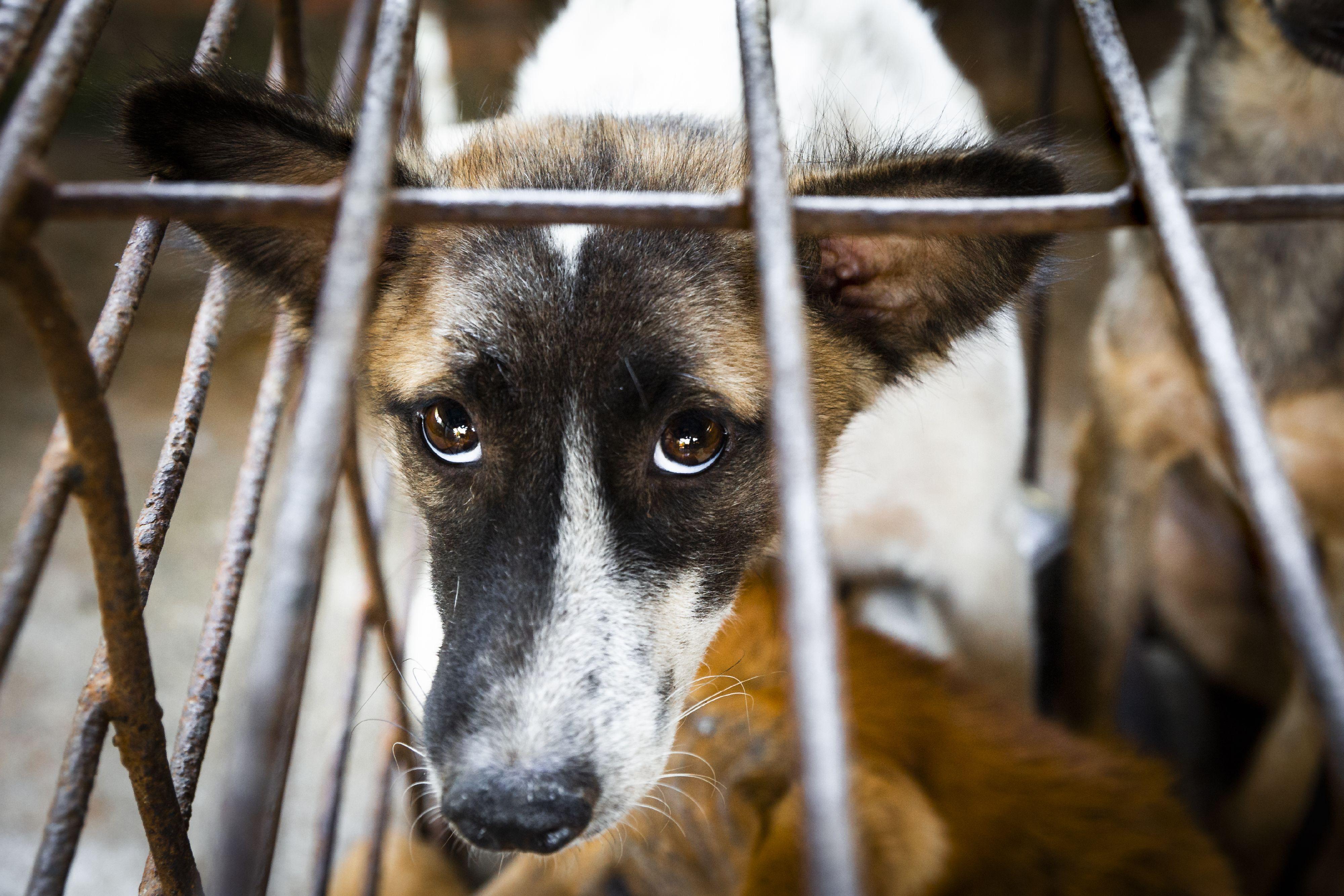 Hond Sopol in een kooi.