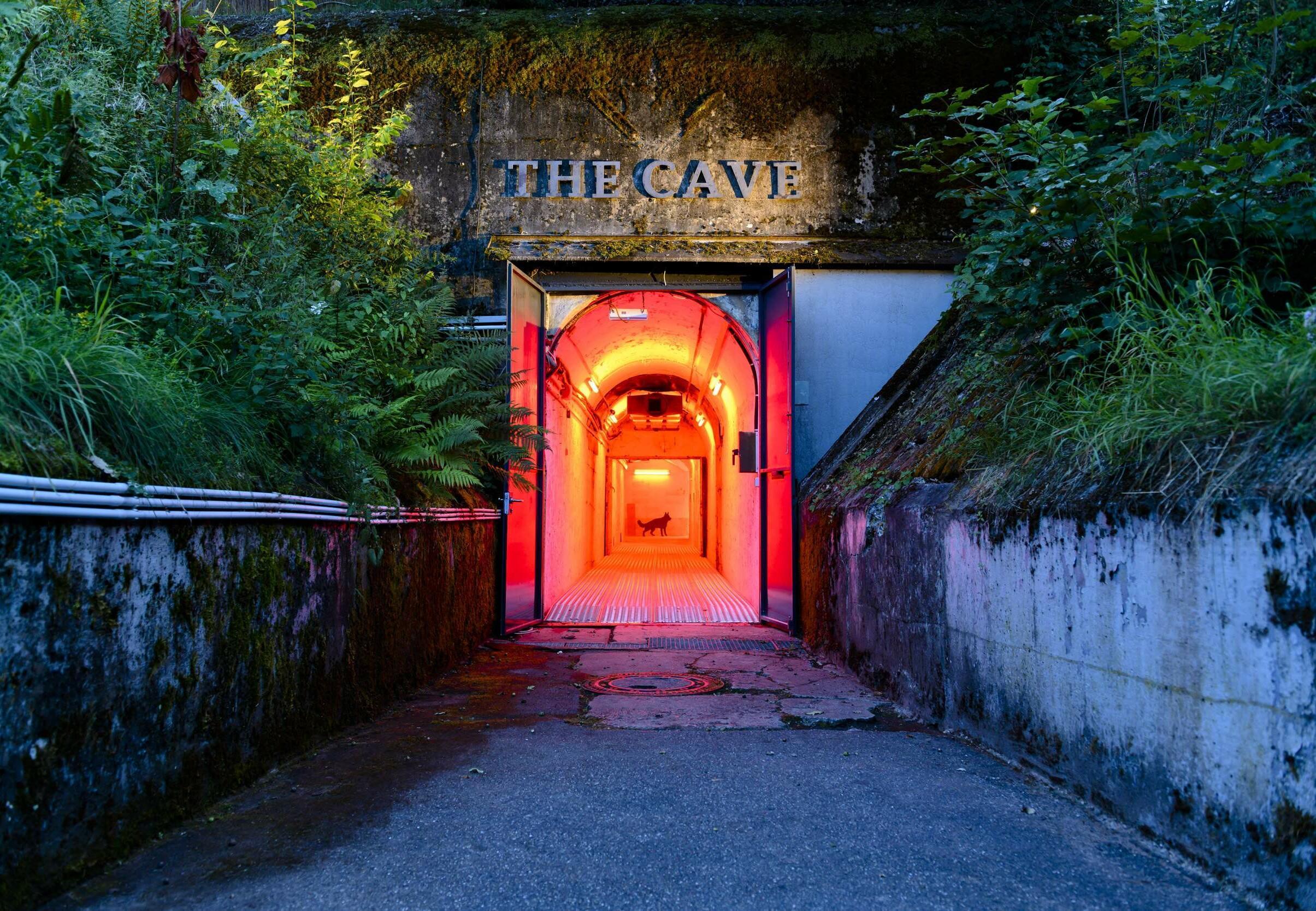 Bunker in TIERART