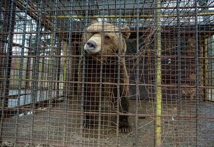 Teddy en cage