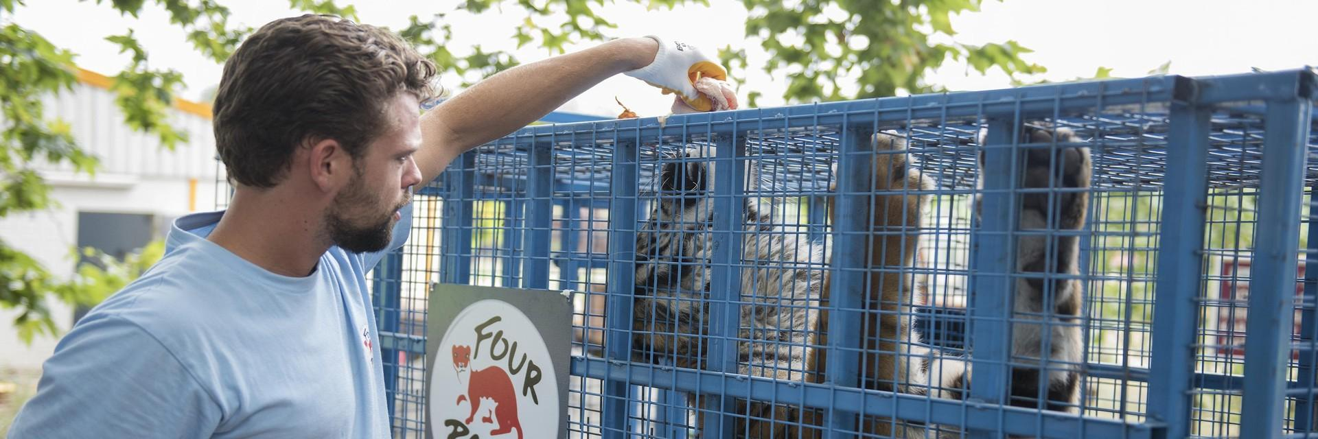 Mitarbeiter Juno in FELIDA Großkatzenschutzzentrum